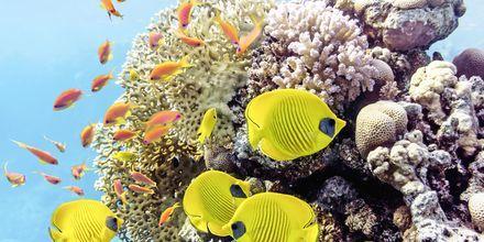 I Soma Bay er vandet perfekt til snorkling og dykning.