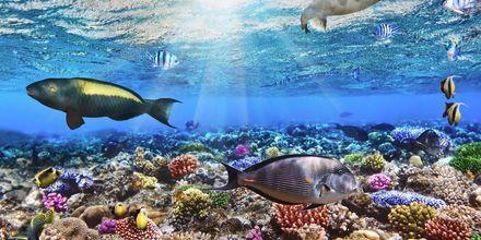 I Det Røde Hav gemmer der sig en farverig undervandsverden.