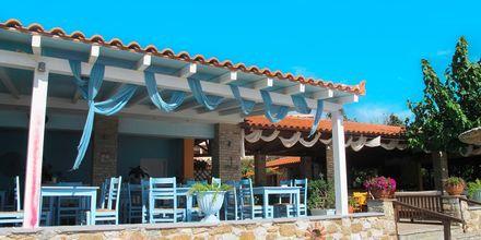Achladies på Skiathos, Grækenland.
