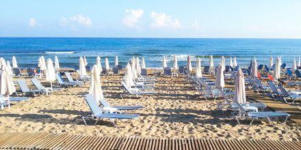 Stranden ved lejlighedshotellet Akrogiali i Malia på Kreta, Grækenland