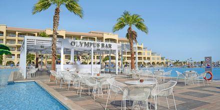 Olympus poolbar på Albatros White Beach Resort i Hurghada