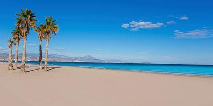 Playa de San Juan i Alicante - en af Spaniens bedste strande.