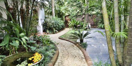 Haven på Hotel Alidia Beach Resort i Det Nordlige Goa, Indien.