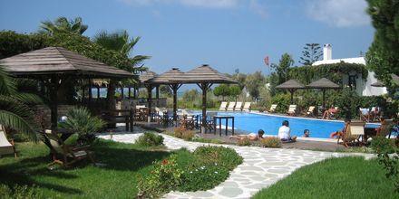 Poolområdet på hotel Alkyoni Beach i Naxos by, Grækenland.