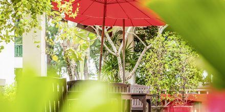 Amora Beach Resort i Bangtao Beach, Phuket