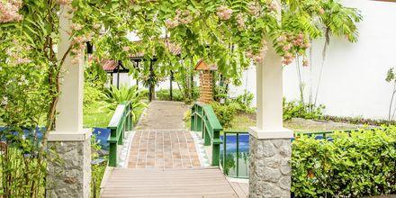 Haven på Amora Beach Resort i Bangtao Beach, Phuket