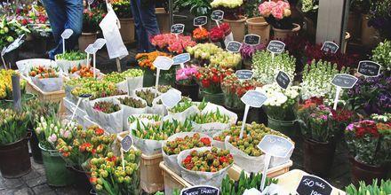 Amsterdam og Holland er kendt for sine tulipaner. På tulipanmarkedet kan du købe tulipanløg til at tage med hjem.