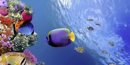 Livet under havets overfalde i Det Røde Hav.