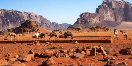Wadi Rums røde landskab i Jordan.