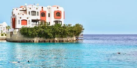 Snorkeltur ved Hotel Arabella Azur Resort, Hurghada, Egypten.