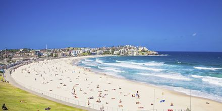 Populære Bondi Beach, Sydney