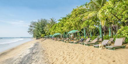 Stranden ved Baan Khaolak Beach Resort