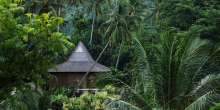 Balis smukke natur.