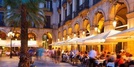 Caféer ved Placa Reial