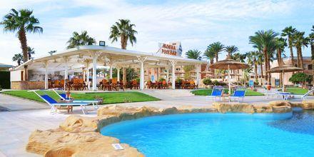 Mocha Bar på Hotel Beach Albatros Resort i Hurghada, Egypten