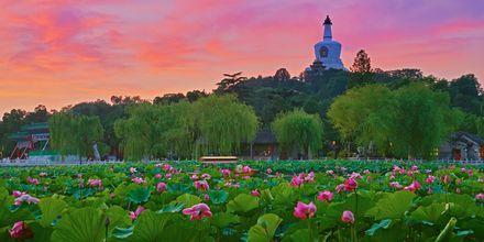En ferie i Beijing byder både på skyskrabere og smukke blomster.