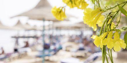 Stranden ved hotel Bella Vista i Hurghada, Egypten