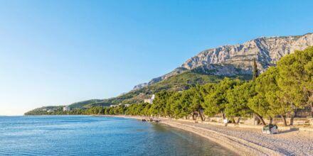 Stranden ved Hotel Bluesun Alga i Tucepi, Kroatien