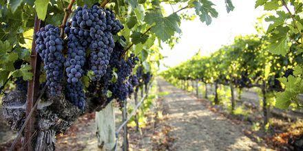 Californiske druer.