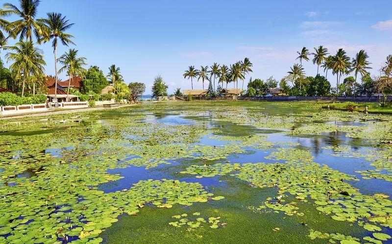 Lotuslagunen i Candi Dasi, Bali