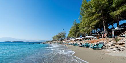 Stranden ved Hotel Candia Park Village på Kreta, Grækenland.