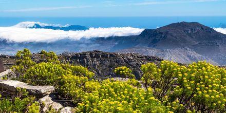 Taffelbjerget, eller Table Mountain, som det hedder på engelsk, strækker sig 60 km langs kysten.