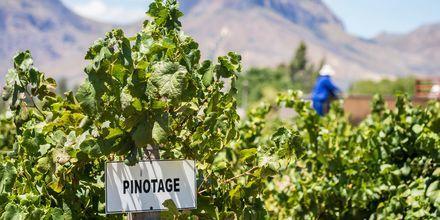 Hvis du elsker vin, så er Cape Town og Sydafrika et perfekte rejsemål.