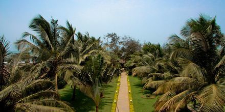 Hotel Chalston Beach Resort i Goa i Indien.