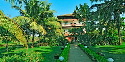 Haven på Hotel Chalston Beach Resort i Goa i Indien.