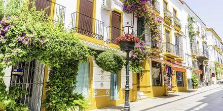Marbella på Costa del Sol er et luksuriøst rejsemål med smukke bygninger og fantastiske blomster.