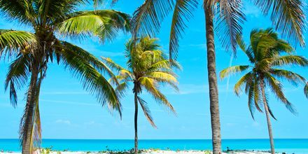 Stranden i Varadero, Cuba