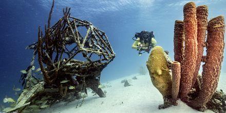 Curacao er verdens bedste dykkeparadis.
