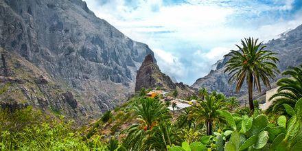 Masca-dalen på Tenerife, De Kanariske Øer, Spanien.