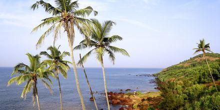 Anjuna Beach, det nordlige Goa i Indien.