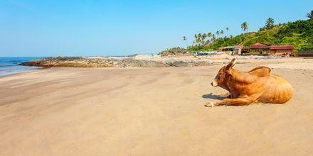 Det nordlige Goa