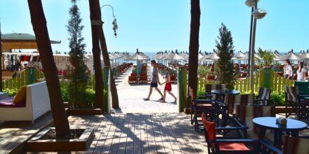 Stranden ved Diamma Resort, Durres Riviera i Albanien.