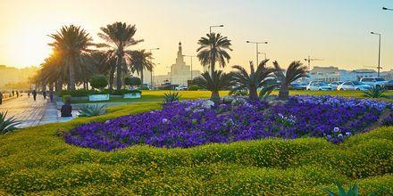 Blomster på strandpromenaden i Doha Qatar.