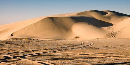 Ørken i Doha - perfekt for ørkensafari.