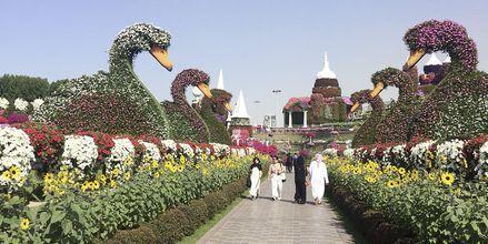 Den Botaniske Have Dubai Miracle Garden i Al Barsha-området i Dubai, De Forenede Arabiske Emirater.