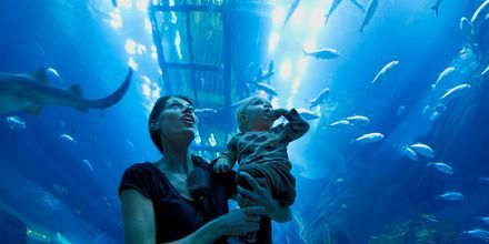 Akvarium i shoppingcentret Dubai Mall i De Forenede Arabiske Emirater.