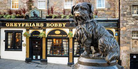 Greyfriars Bobby, en kendt statue i Edinburgh.