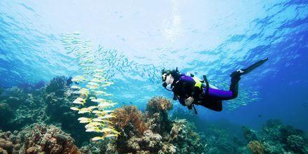Vi tilbyder flere forskellige dykkeudflugter, hvor du  bl.a. kan tage et dykkercertifikat.
