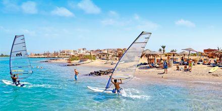 Windsurfing i El Gouna, Egypten.