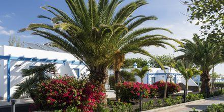 Elba Lanzarote Royal Village Resort, Lanzarote.