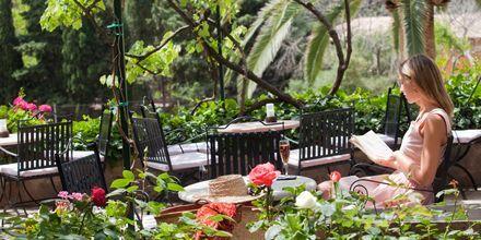 Have på Hotel Es Port i Puerto Soller på Mallorca, Spanien