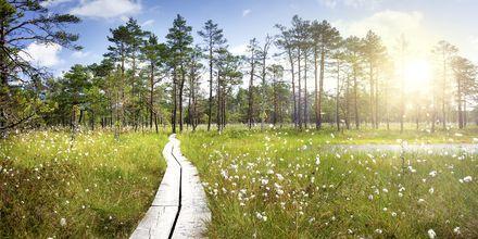 Skøn natur i Lahemaa Nationalpark. Estland.