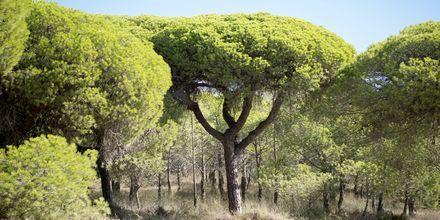 Smuk natur i Faro på Algarvekysten.