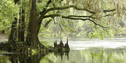 Everglades National Park i Florida er utrolig smuk. Tag med en båd rundt i sumpene og måske er du heldig og se alligatorer.