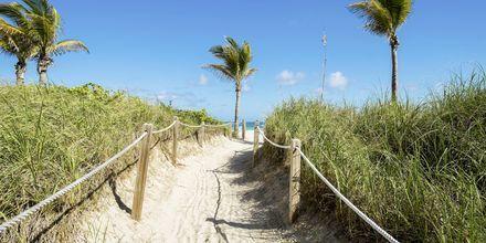Strand i Miami