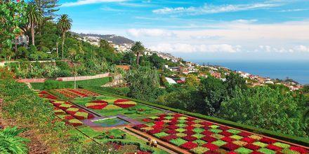 Botanisk have i Funchal, Madeira, Portugal.